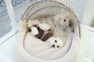 Puppy Models