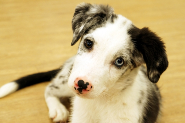Puppy-Dog Eyes