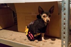Track Suit Doggie