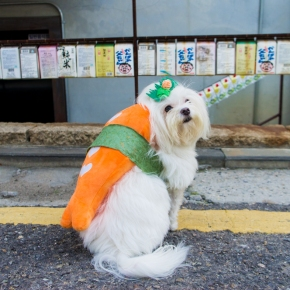Halloween: Dog Sushi