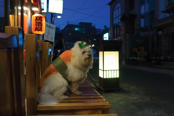 Sushi Watch Dog