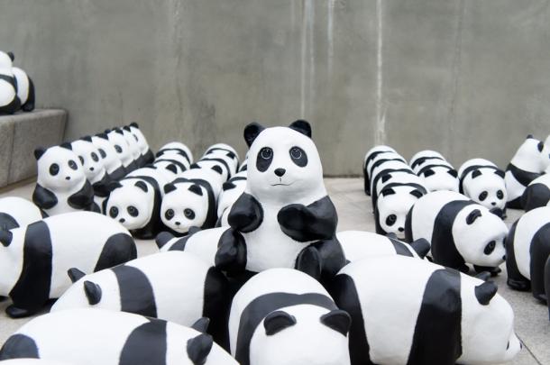 Stair Pandas