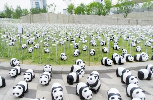 1600 Pandas+ DDP
