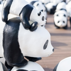 1600 PANDAS+ Come to Korea