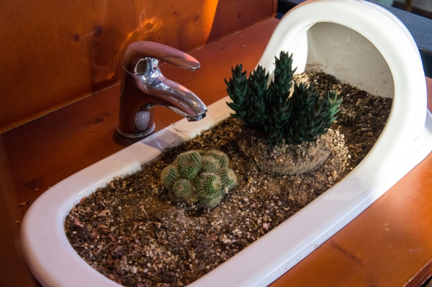 Toilet Plants