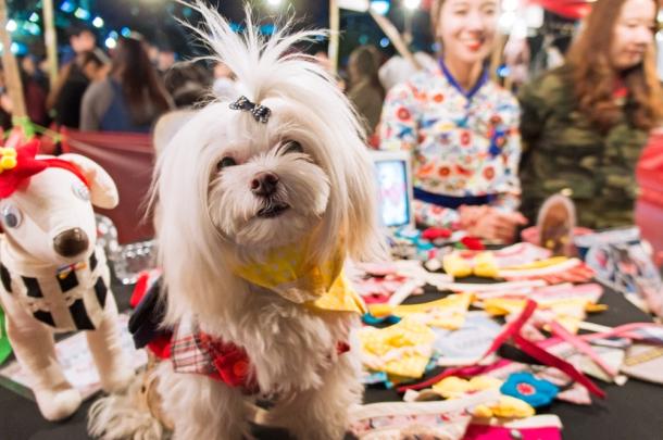Handmade Dog Accessories