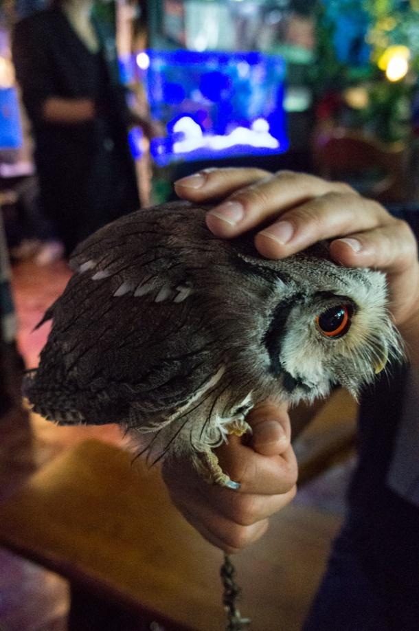 Owl or Egg?