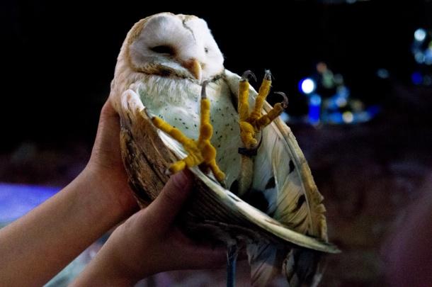 Gift of Owl