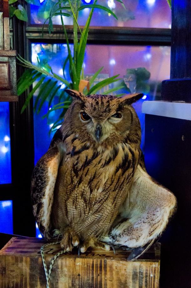 Go Home Owl, You're Drunk