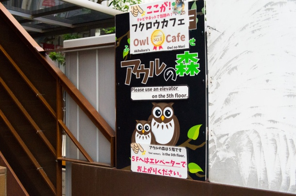 Forest of Owl