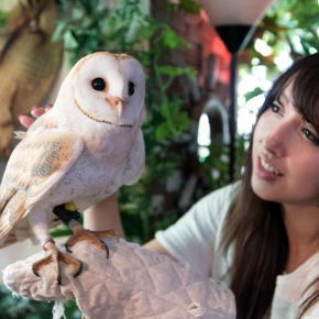 Forest of Owl(アウルの森)