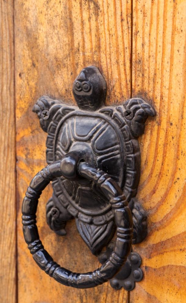 Turtle Knocker