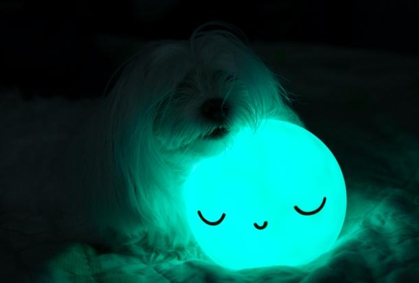 Moon Puppy