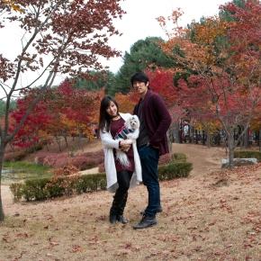 Falling for Fall: Nami Island(남이섬)