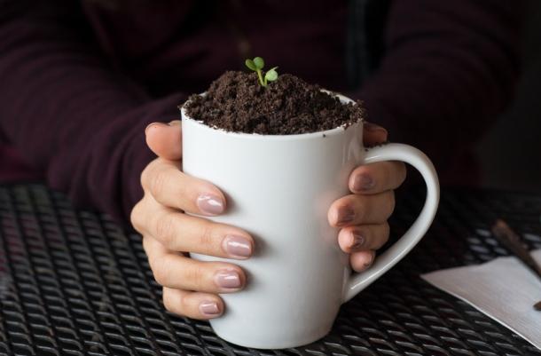 Potted Plant Macchiato