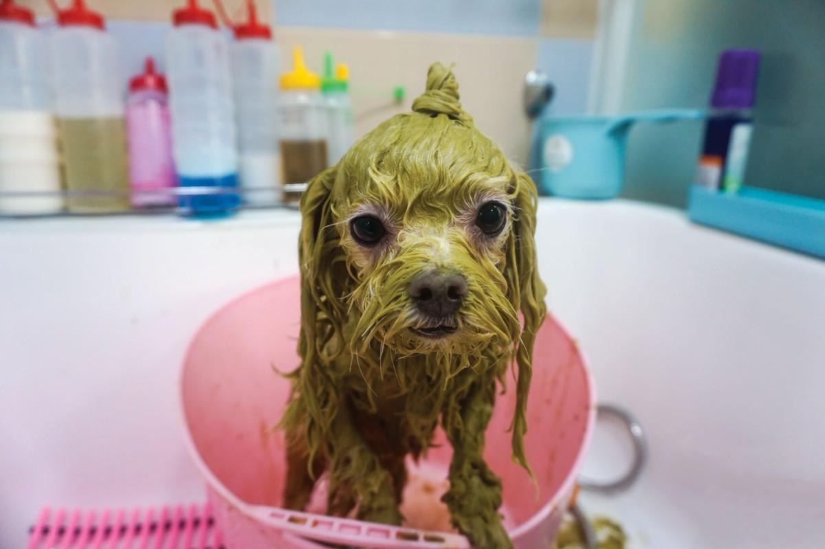 "Ayurveda ""Green"" Dog Bath | Seoul Searching"