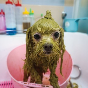 "Ayurveda ""Green"" Dog Bath"