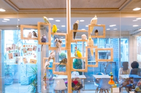 Adorable Bird Cafe in Osaka: Kotori Cafe