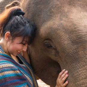 Chiang Mai, Thailand: Elephant JungleSanctuary