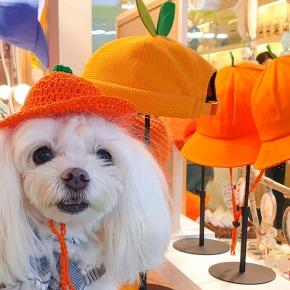 3 Must Visit Jeju IslandMarkets